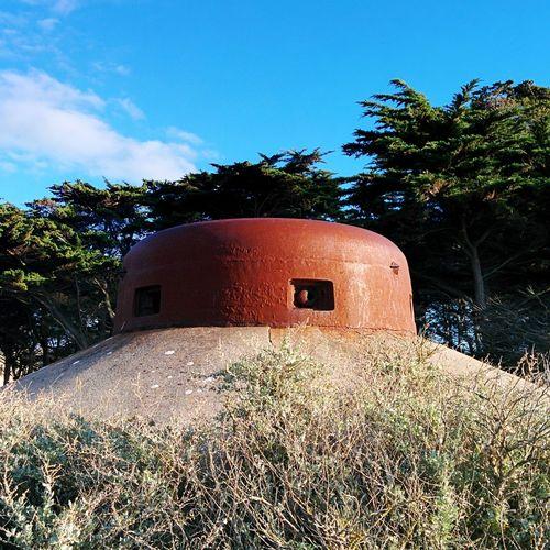 Sunny Bunker