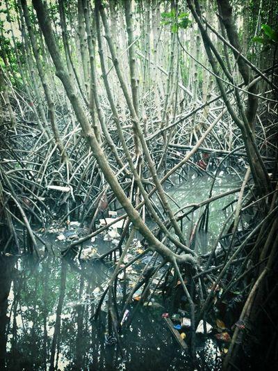 Hutan mangrove banyak sampah Irony Garbage Mangrove Forest