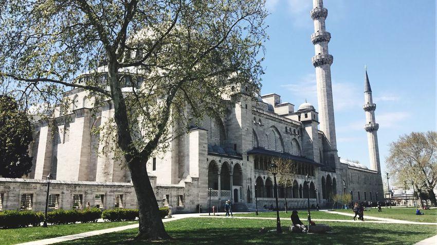 Istanbul Architecture Tree Dome Religion