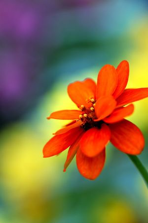 Flower Head Flower Beauty Petal Close-up Plant Botany In Bloom Blossom Blooming