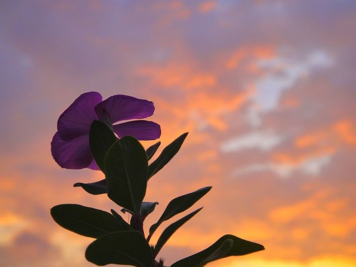 I am but a speck in this universe. Flower Nature Plant Purple Growth Sunset Beauty In Nature Outdoors Close-up Fragility Petal No People Sky Flower Head Leaf Freshness Day Light And Shadow Sunset Silhouettes Silhouette EyeEm Selects Neon Life