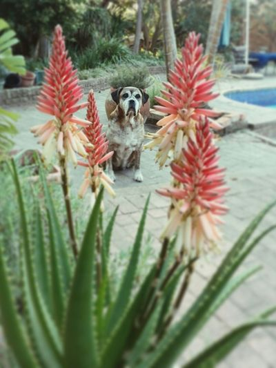 Floral summers besides the pool. Thatsthelife Summer Dogs Southafricanflora