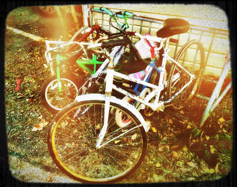 Bicycle Rack Bicycle Transportation Abondoned No People Mode Of Transport Mattroe Mattroedotcom Mattroeartist