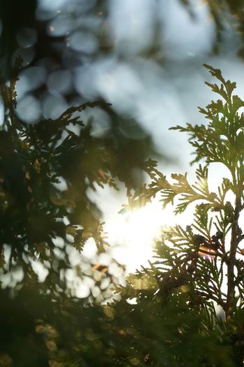 Morning has broken. Morning Light Morning Sunlight Nature Tranquility Sun Light And Shadow Nature Photography Nature_collection Naturelovers Lightings
