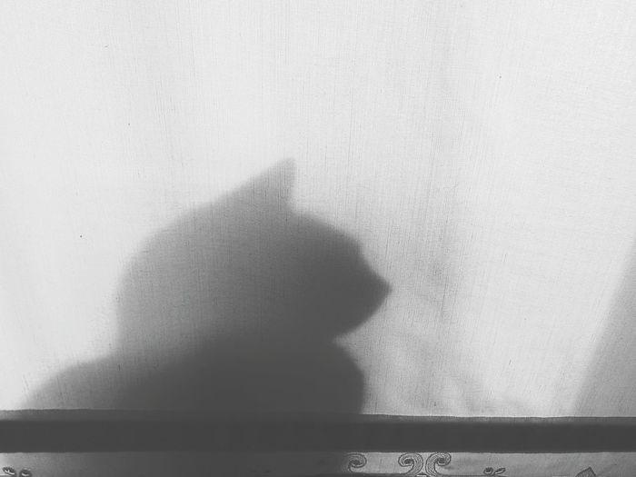 Shadows.  ShadowSelfie Shadows And Backlighting Shadows_collection Shadows & Light Shadow-art Shadows Shadows & Lights Shadow Cats 🐱 Catlovers Cats Of EyeEm Catoftheday Catsofinstagram Cat Lovers Cats Cat♡ Cat EyeEm Best Shots Catsagram