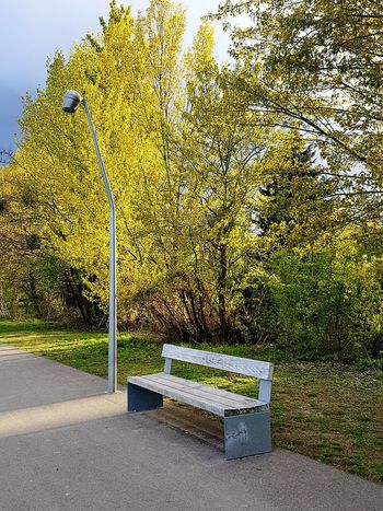 Stille No People Day Nature Outdoors Beauty In Nature Normal Life Details And Colors Berlin Kreuzberg Unterwegs From My Perspective Seeking Inspiration Berlin Street Photography Berlin Detailphotography Streetphotography Nature Outside Afternoon Light - Natural Phenomenon Beauty In Nature Sunlight Treelovers Lighting Tree Afternoon Light The Street Photographer - 2018 EyeEm Awards