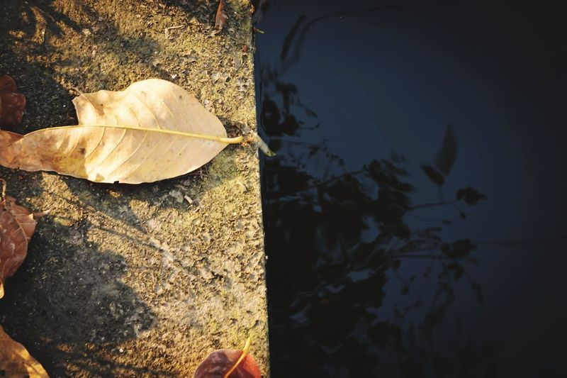 High angle view of maple leaf on water