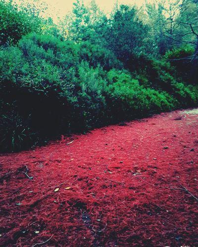 Bourran Autumn🍁🍁🍁 Feuilles Rouge Autumn Novembre 2015 Parc