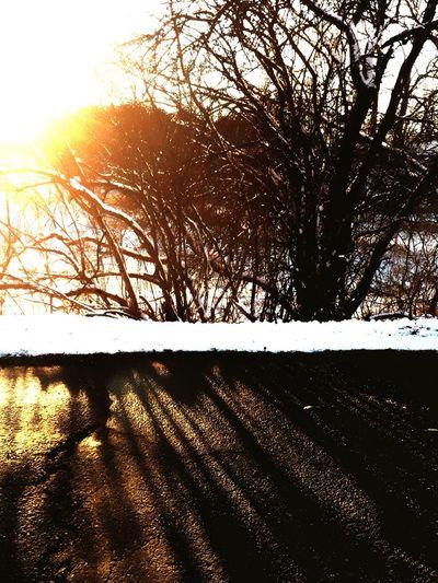 Shadow Sunlight Sunlight And Shadow Beauty In Nature CarolSharkeyPhotography