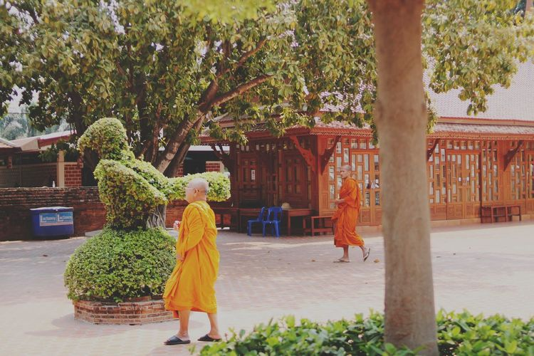 Tree One Person Only Women People Adults Only Outdoors Women Adult Growth Standing One Woman Only Day Real People One Young Woman Only Young Adult Monks Walk Monks Monks In Temple Meditation Thailand🇹🇭 Ayutthaya Thailand Thailandtravel Thailand_allshots Ayutthaya | Thailand