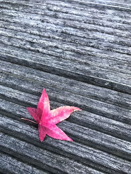 Autumn Leaf Change Maple Leaf Wood - Material Outdoors Dry Pink Color Nature Day Close-up Maple Beauty In Nature Red Fragility
