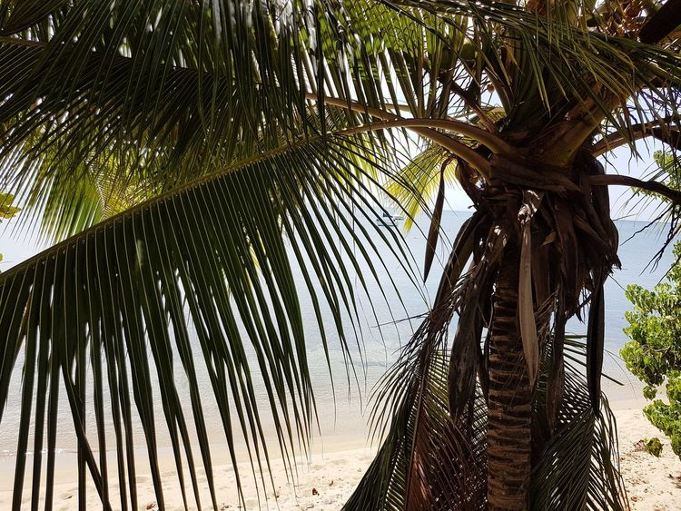Palm Tree Low Angle View Nature Day Outdoors Hanging Beauty In Nature No People Seascape Sea View Sea_collection