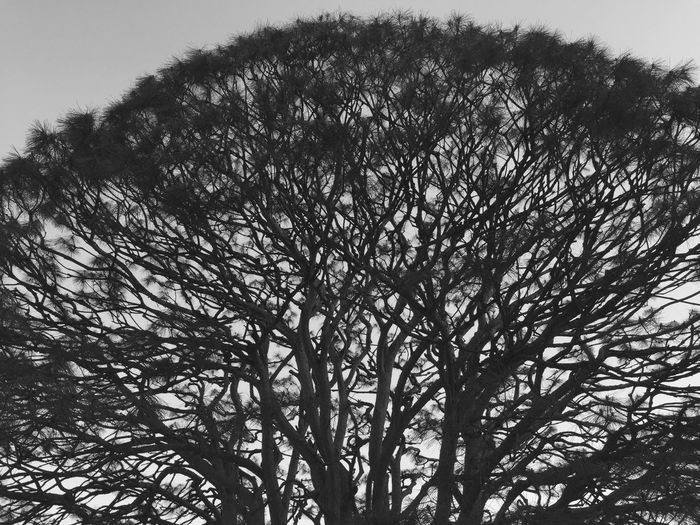 Taking Photos Gloomy Day Sunset Tree