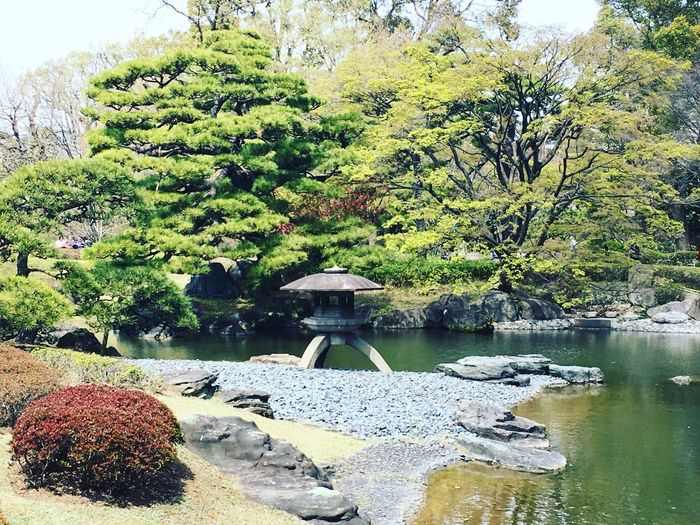 Japanesegarden Asian Culture