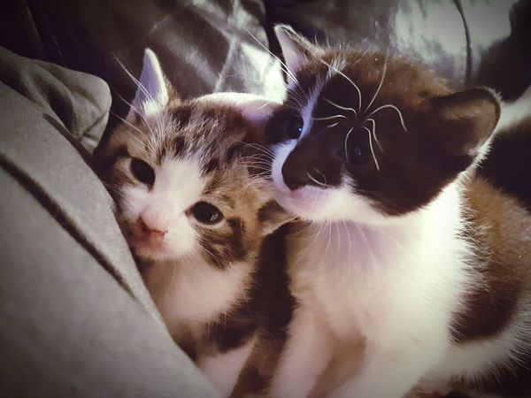EyeEm Selects Pets One Animal Domestic Cat Animal Themes Indoors  Domestic Animals Close-up No People Feline Mammal Portrait Day Kitty Love Love My Kitty Kittycuteness Freshness EyeEmNewHere The Week On EyeEm Cute Picture Sweet Moments Domestic Life Kitten Selfie ♥ Animal