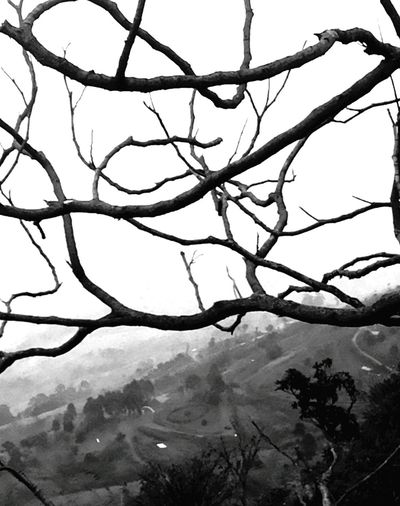 PhonePhotography Hill Station Tree Branches Black And White Black & White Curvey Roads Long Distance Shot Shades Of Grey Lost In The Landscape