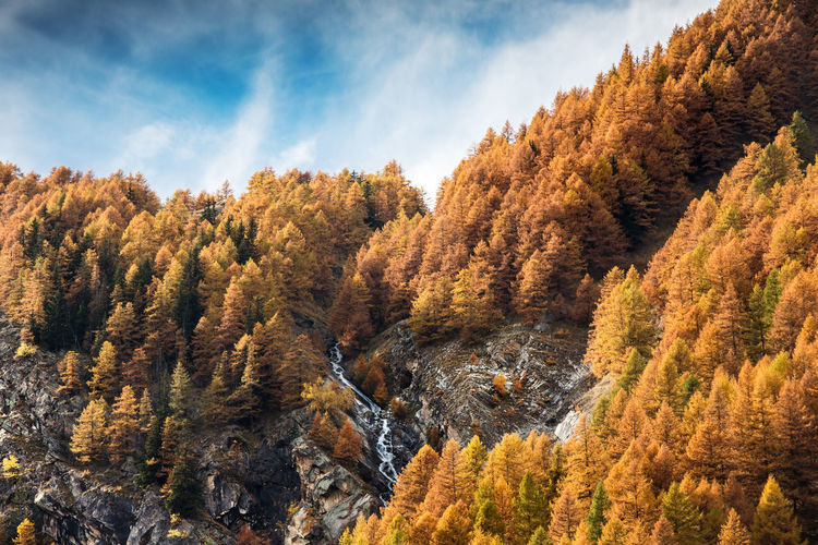 Tree Scenics - Nature Beauty In Nature Nature Wood Forest Mountain Landscape Autumn colors Autumn Leaves Autumn Collection Forest Photography Mountain View Leaves_collection Autumn🍁🍁🍁 Sky And Clouds Warm Colors Warm Light Mountain Road Outdoor Photography Nature Photography Nature_collection Naturelovers Nature Reserve