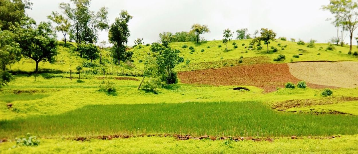 Green world Landscape Tree Rural Scene Grass Agriculture Green Color Beauty In Nature Nature Field Hill