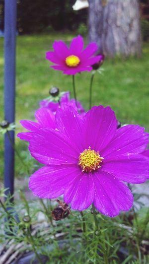 Garden Having A Good Time EyeEm Best Shots - Nature Flowers