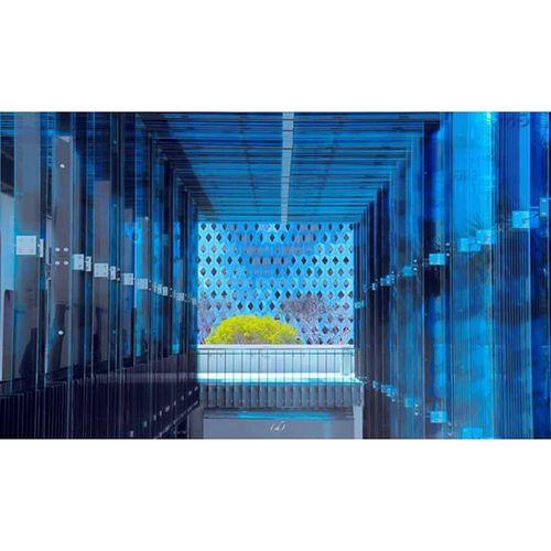 Aquarium Miami Miamicenterdesign Florida Floride Centre Design Architecture Blue Bleu Espoir Hope Tunel Tunnel Color Couleur Aufond Carré Geometric Geometrie