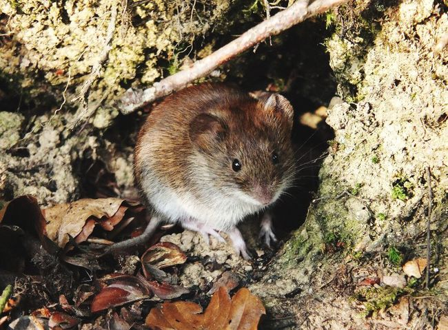 Mouse Nature One Animal Sweet Animal Animals In The Wild Animal Wildlife No People Close-up Forest Forest Photography Forestwalk Path Tree Lookintomyeyes