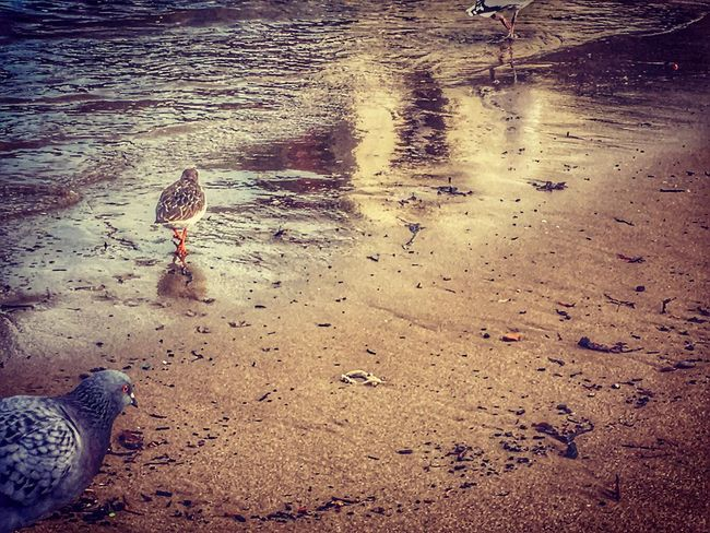 Little Bird Animal Themes Bird No People Outdoors Nature Water Day Close-up Beautiful Beauty In Nature Ireland Ireland Coast