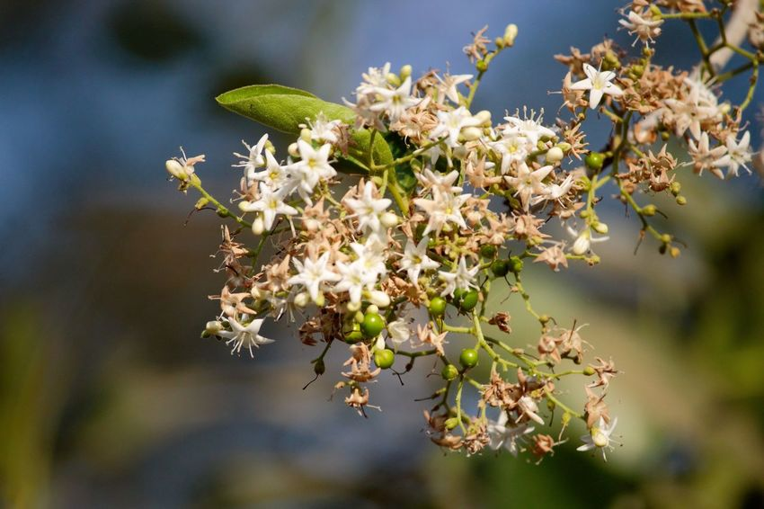 Flower Bush at Nakan Dam Animal Themes Beauty In Nature Blossom Close-up Day Flower Fragility Freshness Growth Nature No People Outdoors Plant Springtime Tree
