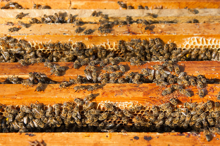 Animal Animal Themes Animal Wildlife Animals In The Wild Insect Invertebrate Large Group Of Animals Group Of Animals Beehive APIculture Bee Honey Bee No People Wood - Material Nature Close-up Beauty In Nature Sunlight Food Day