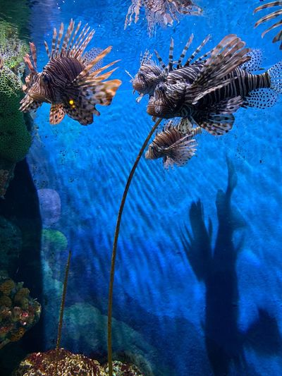 Swimming above the shadow. Oceanworld First Eyeem Photo Sea Fishes Iphonephotography IPhoneography Bangkok Animals In The Wild Animal Wildlife Animal Sea Sea Life Swimming Fish Blue Ecosystem  Nature EyeEmNewHere Animal Themes Animals In The Wild Water Vertebrate Nature Swimming No People Group Of Animals Underwater Marine Beauty In Nature UnderSea