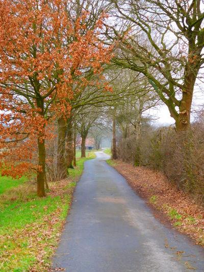 Street Photography Streetphotography Street Naturephotography Nature Photography Nature Tree Trees Nature Harmony Street And Trees