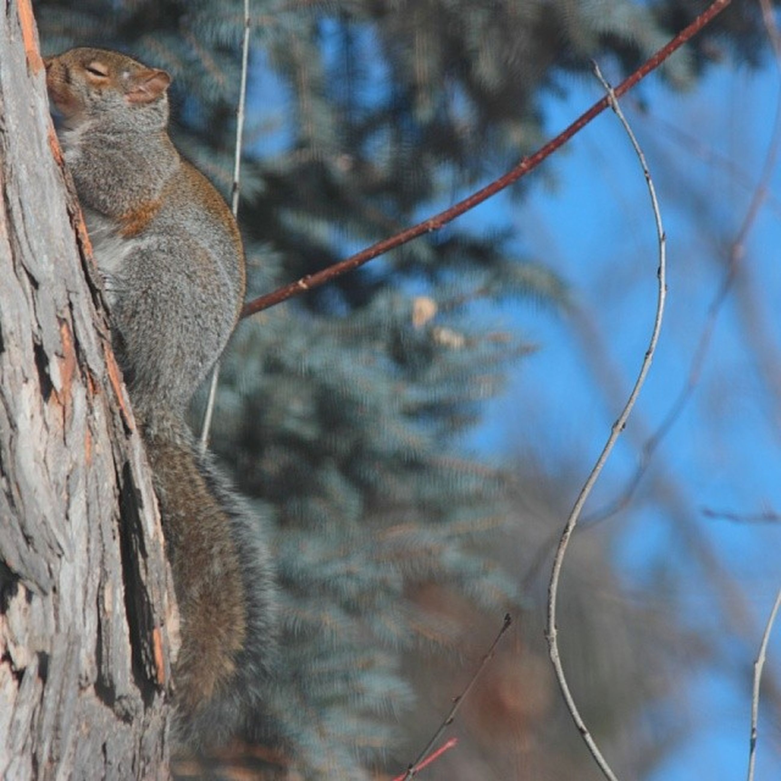animal themes, focus on foreground, branch, one animal, close-up, tree, nature, day, outdoors, mammal, fence, tree trunk, animals in the wild, wildlife, no people, selective focus, chainlink fence, part of, twig, plant