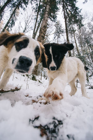 Dogs Dogs Of EyeEm Fun Livestock Nature Winter Animal Themes Animals Beauty In Nature Close-up Cold Temperature Day Dog Domestic Animals Mammal Mammals Nature Nature_collection No People Outdoor Photography Outdoors Pets Snow Tree Winter