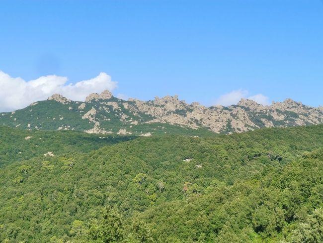 https://it.m.wikipedia.org/wiki/Parco_dei_Sette_Fratelli_-_Monte_Genis Sardinia Sardegna Italy  Sardinia Sardegna Mountain Tree Rural Scene Agriculture Pattern Sky Landscape Green Color Plant