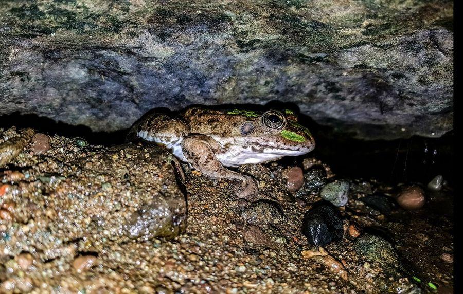 Doğa Aniyakala Ordu Nature Dogal Naturalness Ordu TURKEY Türkiye Turkey Frog Animal Vahşi Hayat Hayvan Wild Life Kurbaga