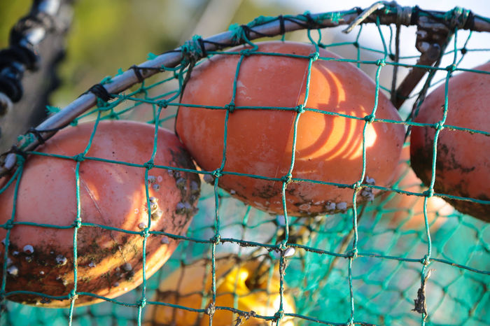 Beauty In Nature Close-up Day Fishing Fishing Net Fishing Tools Floating Floats Focus On Foreground Food Food And Drink Freshness Fruit Full Frame Hanging Healthy Eating Nature Net No People Orange Orange Color Outdoors