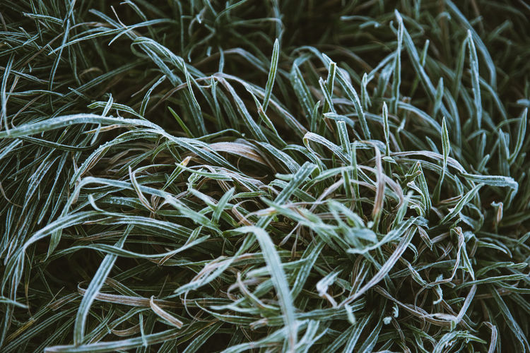 Early Winter Morning Mood. Plant Grass Nature Green Cold Ice Day Close-up Outdoors Full Frame Grashalm Tau