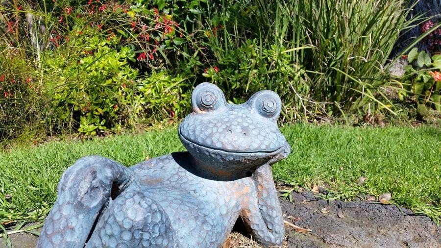 Flowers Frog
