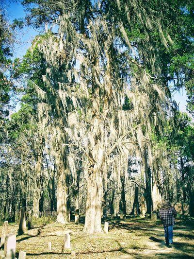 Walking Alone... Cemetery Cemetery_shots Cemetery Photography Walking Shadows Sunlight Moss Mossy Mossy Tree Tree Backgrounds Sky Tree Trunk