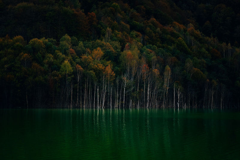 Scenic view of lake and forest in autumn