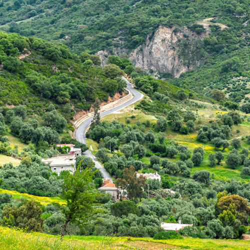 Nature is love. Landscape Green Tunsia Tunis Road Tree Mountain High Angle View Agriculture Terraced Field Landscape Grass Green Color Mountain Road Empty Road vanishing point Grassland Asphalt Treelined Countryside