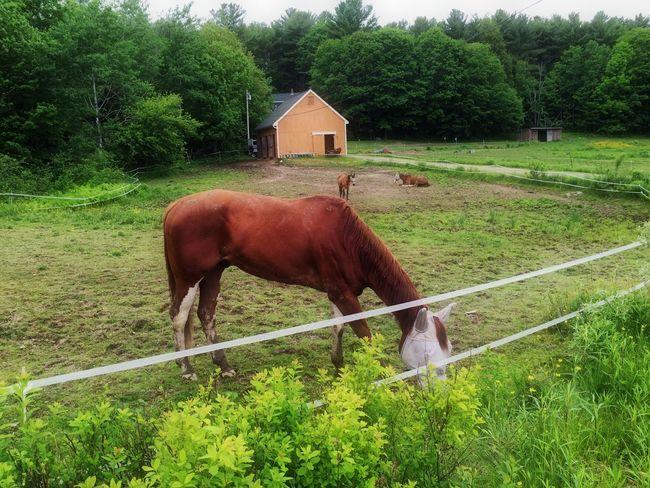 Horses Beautiful Creatures Maine
