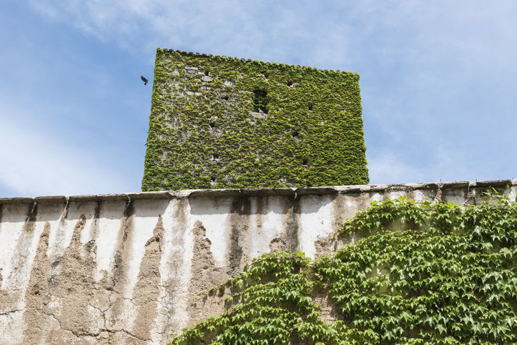Building covered by plants in historic center of Cáceres Architecture Bird Black Bird Blue Sky Building Exterior Composition Covered Covered By Vegetation Crow Cáceres Historic Center Historical Building Outdoors Plants Royal Shapes , Lines , Forms & Composition Simple Photography SPAIN Wall White Clouds Window