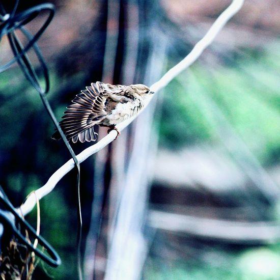 No People Outdoors Close-up One Animal EyeEm Birds🐦⛅ Kathmandu Nepal