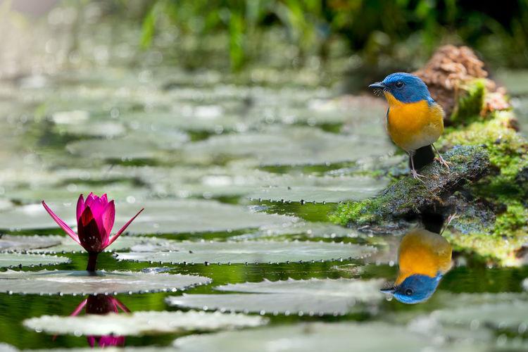 Beautiful bird,