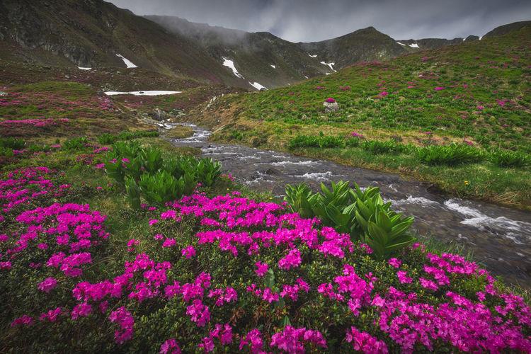 Purple flowering plants by land against sky