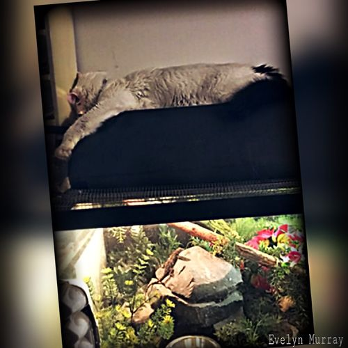My cat has find the best place to sleep and stay warm! 😹😹😉👍 Photo Editing Pet Portraits Reptile In Captivity Animal Photography Cats No People Plant Nature Vertebrate Day Indoors  Auto Post Production Filter Animal Domestic Animal Themes One Animal House Relaxation Architecture Growth Window Sofa Close-up Pets