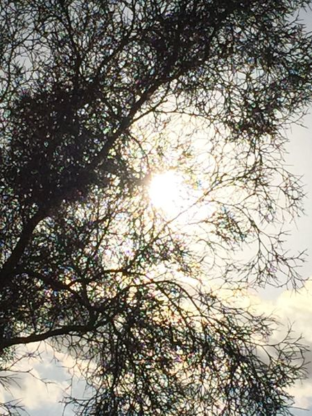 The Purist (no Edit, No Filter) Patterns & Textures DesertSky Sunlight Sillouette Hugging A Tree