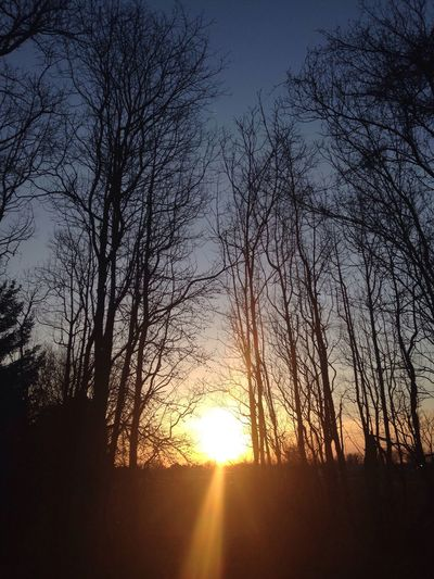 Sunsets are beautiful Pure Michigan Sunsets Nature_collection Beautiful Treescollection The Purist (no Edit, No Filter) Nature Photography Sunset_collection Chill Vibes Naturelovers Nature On Your Doorstep TreePorn Showcase April Naturesway