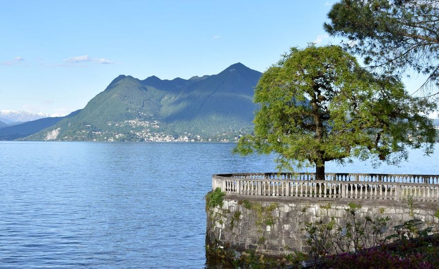 Maggiore tree view Mountain Day Beauty In Nature Nature Scenics Water No People Outdoors Sea Tree Tranquility Mountain Range Sky Clear Sky Architecture