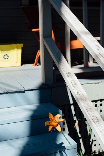 Untitled Architecture Built Structure Flower Flower Head Fragility Orange Color